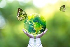 绿色世界和蝴蝶在人手,绿色背景上 库存图片