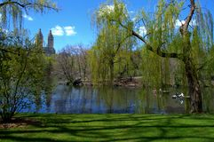 绿色中央公园 免版税库存图片