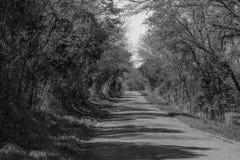 黑色乡下公路白色 库存照片