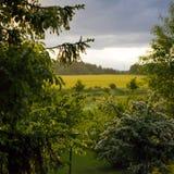 绿色乡下风景 免版税图库摄影