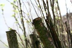 年轻绿色事假、分支和树干在轻的天空背景 免版税库存图片