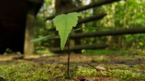 绿色事假,年轻树 免版税库存图片