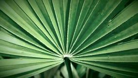 绿色事假 图库摄影