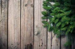 绿色云杉的分行 免版税图库摄影
