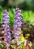 紫色五颜六色的花 免版税库存图片