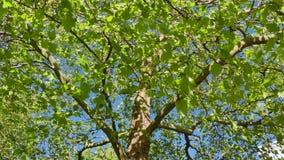 绿色住宅区安置树 股票录像