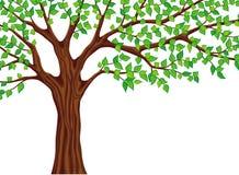 绿色例证结构树向量 免版税库存图片