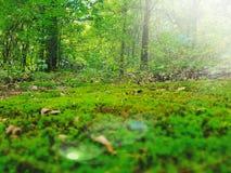 绿色俄克拉何马自然照片 免版税库存图片