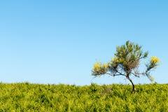 黄色偏僻的树 图库摄影