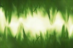 绿色充满活力的草背景 免版税图库摄影