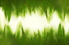 绿色充满活力的草背景 免版税库存图片
