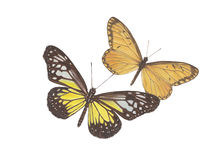 黄色光滑夫妇 免版税库存照片