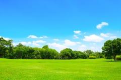 绿色公园和树与蓝天 免版税库存照片