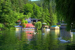 绿色公园平静视图 免版税库存图片