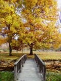 黄色公园树 库存图片