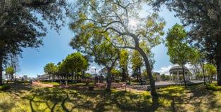 绿色公园的全景 库存照片