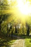 绿色公园看法在城市 库存图片