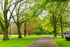 绿色公园自然树 图库摄影