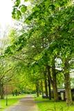 绿色公园自然树 库存图片