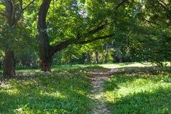 绿色公园路 库存图片