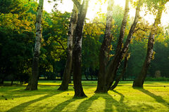 绿色公园结构树 免版税库存图片