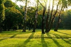 绿色公园结构树 免版税图库摄影