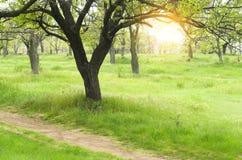 绿色公园 库存照片