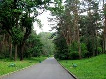 绿色公园witn树和长凳 免版税库存图片