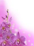 紫色兰花分支有抽象bokeh背景 免版税图库摄影