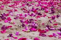 紫色兰花和桃红色玫瑰的瓣在沙子靠岸 免版税库存图片