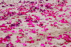 紫色兰花和桃红色玫瑰的瓣在沙子靠岸 库存照片