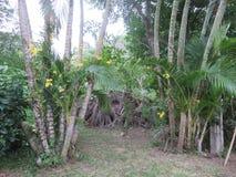 黄色兰花和椰子树在庭院里 库存照片