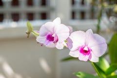 紫色兰花在庭院里 库存照片