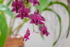 紫色兰花在庭院里 库存图片