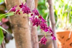 紫色兰花在庭院里 免版税库存图片