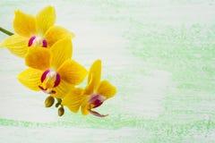 黄色兰花植物兰花分支背景 免版税库存图片