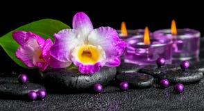 紫色兰花石斛兰属,绿色叶子水芋属lil温泉背景  免版税库存图片