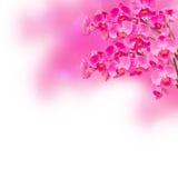 紫色兰花花分行 免版税库存照片