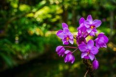 紫色兰花花束有绿色背景 免版税库存图片
