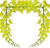 绿色兰花 免版税库存照片