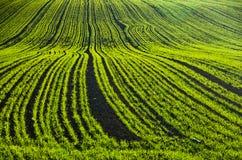 绿色农业领域晴朗的秋天天 库存照片