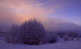 紫色冬天早晨 库存图片
