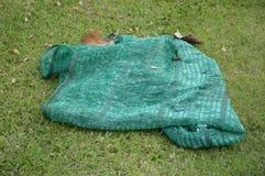 绿色净阴影 免版税库存照片