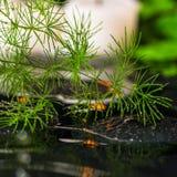 绿色分支芦笋美丽的温泉静物画与露水的和 免版税库存图片