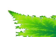 绿色分数维叶子边界 库存图片