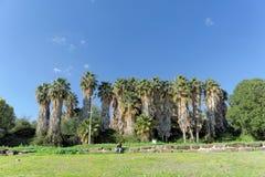 以色列 - 2月17日 2017年 加利利海的岸的棕榈树丛在以色列 库存图片