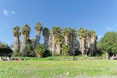 以色列 - 2月17日 2017年 加利利海的岸的棕榈树丛在以色列 图库摄影