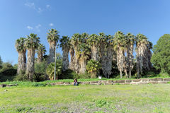 以色列 - 2月17日 2017年 加利利海的岸的棕榈树丛在以色列 免版税库存图片