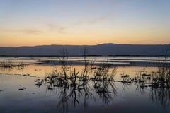 以色列 死海 黎明 免版税库存照片