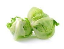 绿色卷心莴苣 免版税库存图片
